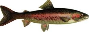 Рыбалка форели радужной