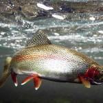 Рыбалка форели — занятие для настоящих аристократов