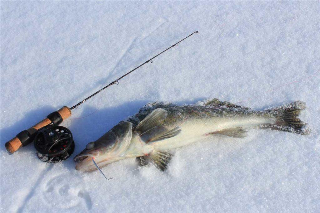 Ловля судака на блесну со льда