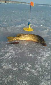 Ловля щуки зимой на реке на жерлицы
